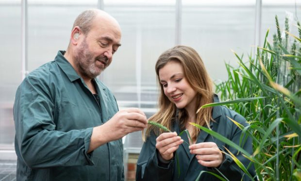 Professor Nigel Halford and  researcher Sarah Raffan of Rothamsted Research.