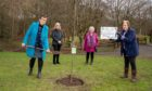 From left: Judith Moon, Wilma McCullough, Frances Allan and Christine MacFarlane plant a tree at Quarry Mill wood.