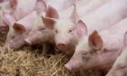 Pig farmers are facing price cuts and a delay in getting animals to slaughter due to staff shortages at processing plants.