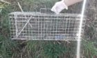 A cat was found dead in this wire trap in Tayport.