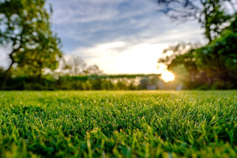 Inspect your lawn this month