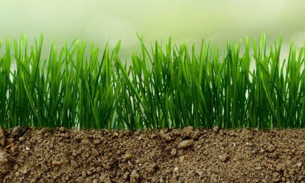 Carbon sequestration is one of the many benefits of regenerative agriculture.