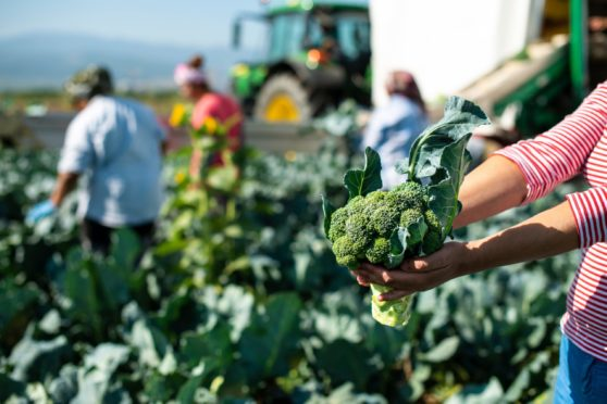 More than 60% of horticulture growers voted to abolish the statutory levy for their sector.