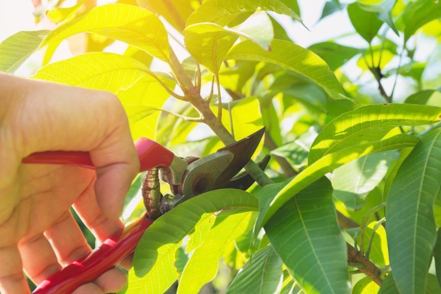 gardening pruning