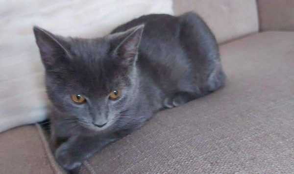 Blue has been missing for almost a month.
