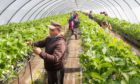 HELPING HAND: The number of foreign seasonal workers allowed was extended from 10,000 to 30,000 this year.
