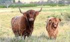 The STFA says short-term tenancies make it difficult for tenant farmers to invest in environmental schemes.