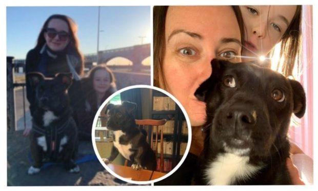 Dundee wedding postponed dog