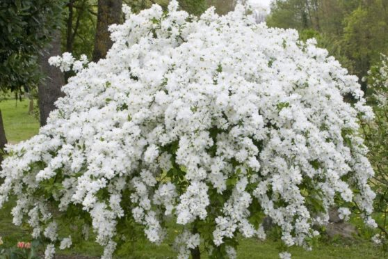12 Lovely Shrubs To Enjoy In Your Garden