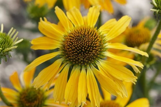 12 Plants to Help Attract Pollinators into the Garden