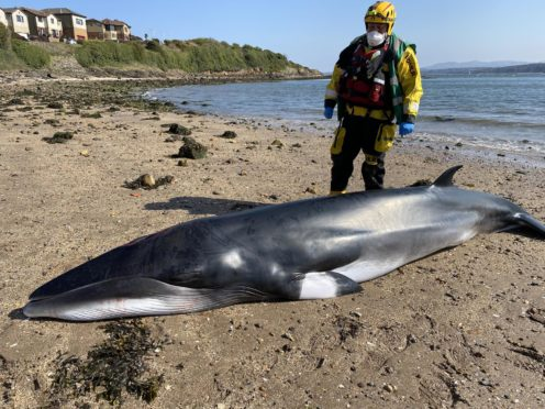 BDMLR operation co-ordinator Paul Smith with the minke whale.