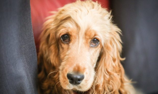 Many dogs are likely to be spending more time alone soon