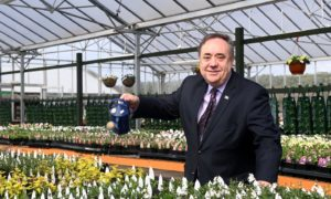 Off to a flier? Alba Party leader Alex Salmond does not appear on its campaign leaflets.
