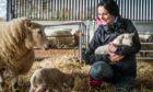 Gayle cuddles a newborn lamb at Debbie and Neil McGowan's farm, Incheoch, in Glensla.