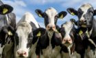 Milk production is predicted to grow slightly in  the next year..