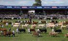 June's Royal Highland Showcase at Ingliston will see animals judged without spectators.
