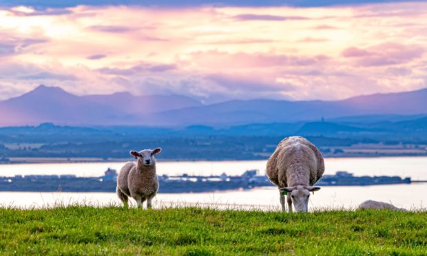 The guide is the latest in a series of guidance documents published by Tenant Farming Commissioner Bob McIntosh.