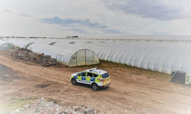 Damage was done to crops at a farm north of Arbroath this week.