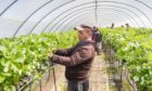 Overseas labour is essential to pick seasonal crops.