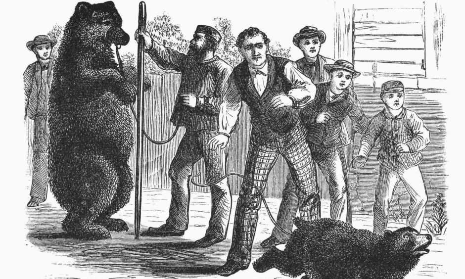 A drawing of brown bears being chained up and used as entertainment on the streets circa 1840.