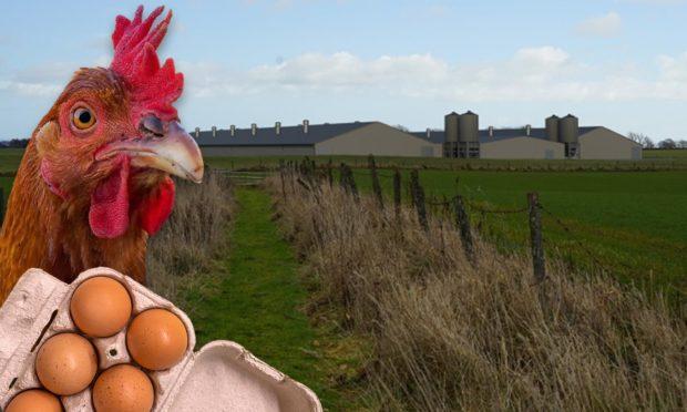 cononsyth hens sheds
