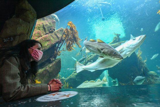Gayle hangs out at the kelp tank at Macduff Marine Aquarium.