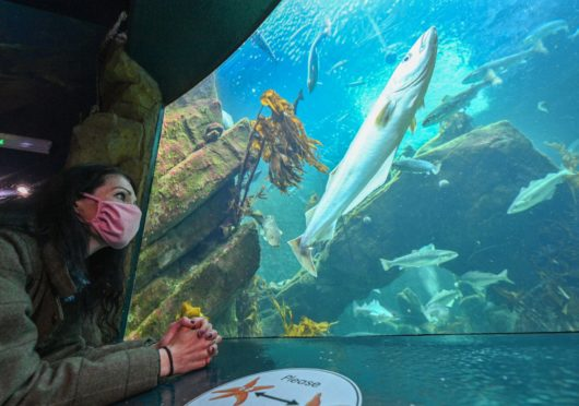 Macduff Marine Aquarium is one of the north-east's top tourist attractions.
