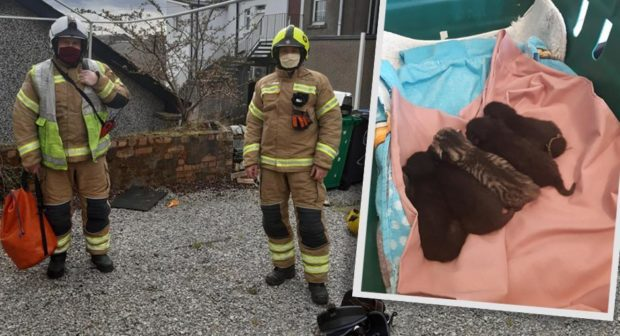 The litter of new born kittens were discovered high up inside the chimney stack.