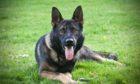Police dog Dale