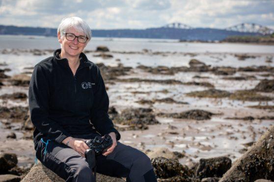 Harbour seals decline