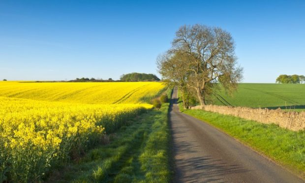 Vibrant yellow crop of canola grown as a healthy cooking oil or conversion to biodiesel as an alternative to fossil fuels.; Shutterstock ID 135735242; Job: Farming; 66b9d754-fb76-48a0-86b9-8da00c503a70