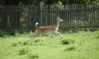 Rab's finally keep the deer out with his new fence. Or has he?