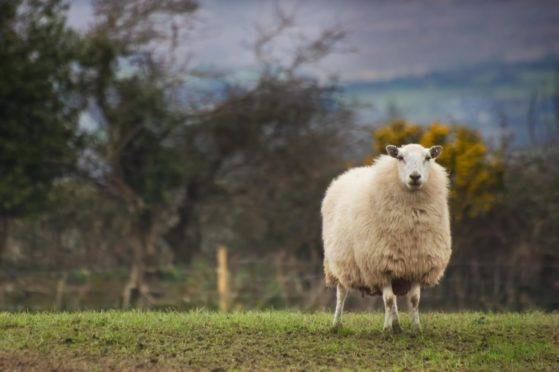 More than 650 farmers and vets responded to Ruminant Health and Welfare's Survey.
