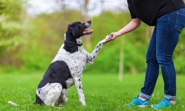 mixed breed dog gives a woman the paw; Shutterstock ID 627476003; Purchase Order: Health and wellbeing team; Job: Therapets; 7ab56b0f-bd4c-48f2-85d2-ba116b33ef8c