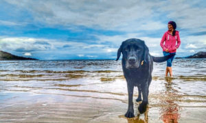 Gayle and her Labrador Toby on Singing Sands near Kentra.