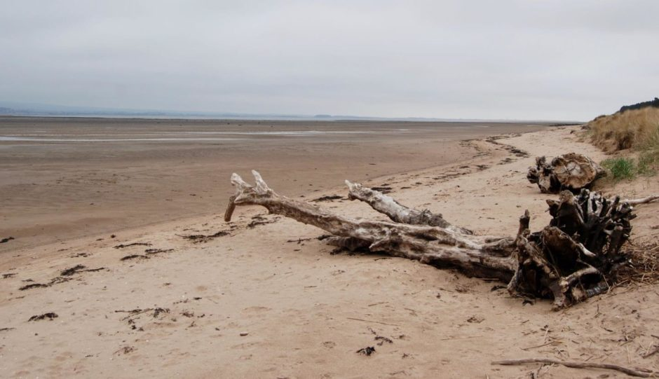 Dead wood on a beach at the shore on Tentsmuir nature reserve