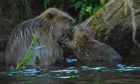 Fishing industry representatives have raised concerns that beavers will negatively impact fish stocks - though beavers are herbivores.