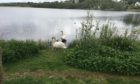 The welcoming party of swans on the loch at Fiona's mum's house.