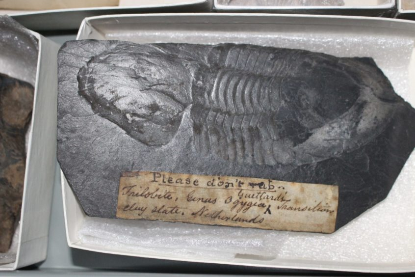 Fossil of an Ordovician trilobite