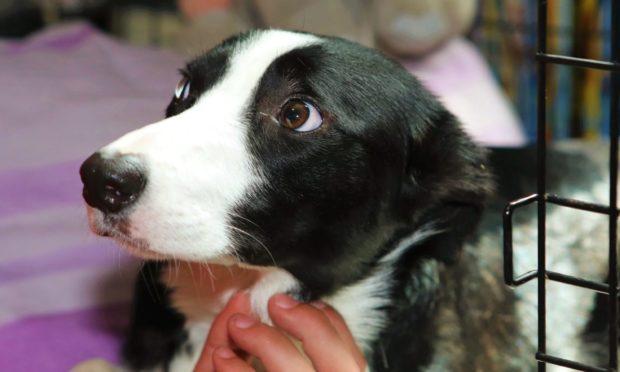Injured puppy Mysti