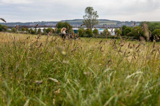 Uncut grass at Dundee's Magdalen Green.