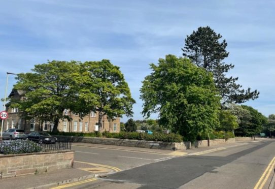 The trees surrounding the former Panmure Hotel in Monifieth.