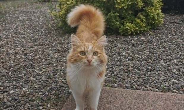 Summer the cat who went missing from Fintry for a month.