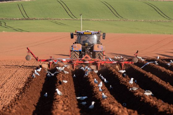 Potato growers are asked to complete the survey before June 25.