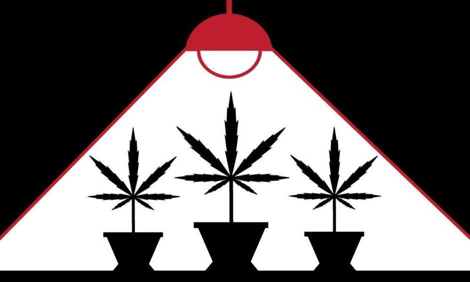 cannabis farm industry
