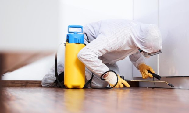 A pest control expert in a house