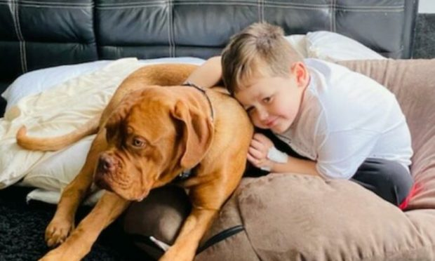 Oaklié Boss, four, reunited with his seven-month-old puppy.