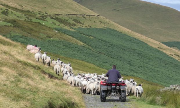 Various farming reports have called for new policy to be introduced as soon as possible.