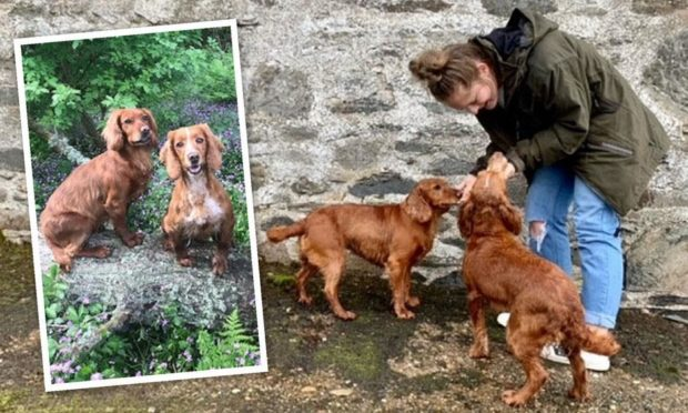 Iona McGregor reunited with her two stolen dogs after they were found in separate locations in England.