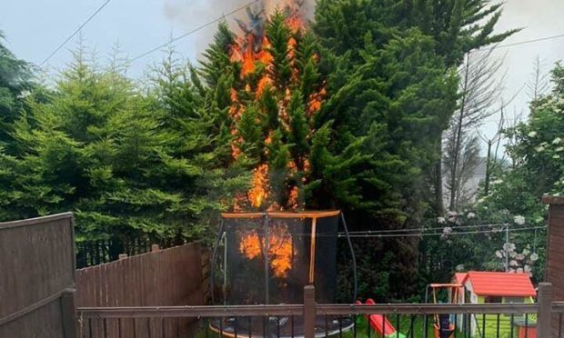 The tree that was set on fire